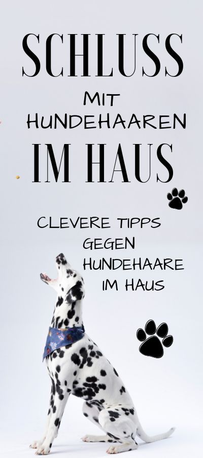 / Anzeige / FELLWECHSEL – clever tips against dog hair in the house