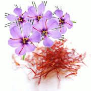 Pure Saffron Extract - The Best Way to Burn Fat      http://www.saffronextractreviews.us/pure-saffron-extract/        Saffron is actually a flower, which is grown primarily in Spain and most people know this as a spice that is used in     certain foods. Recently, a study was shown that proves that Pure Saffron Extract can help people lose weight quickly and     safely as a result of it being both a fat burner and an appetite suppressant.