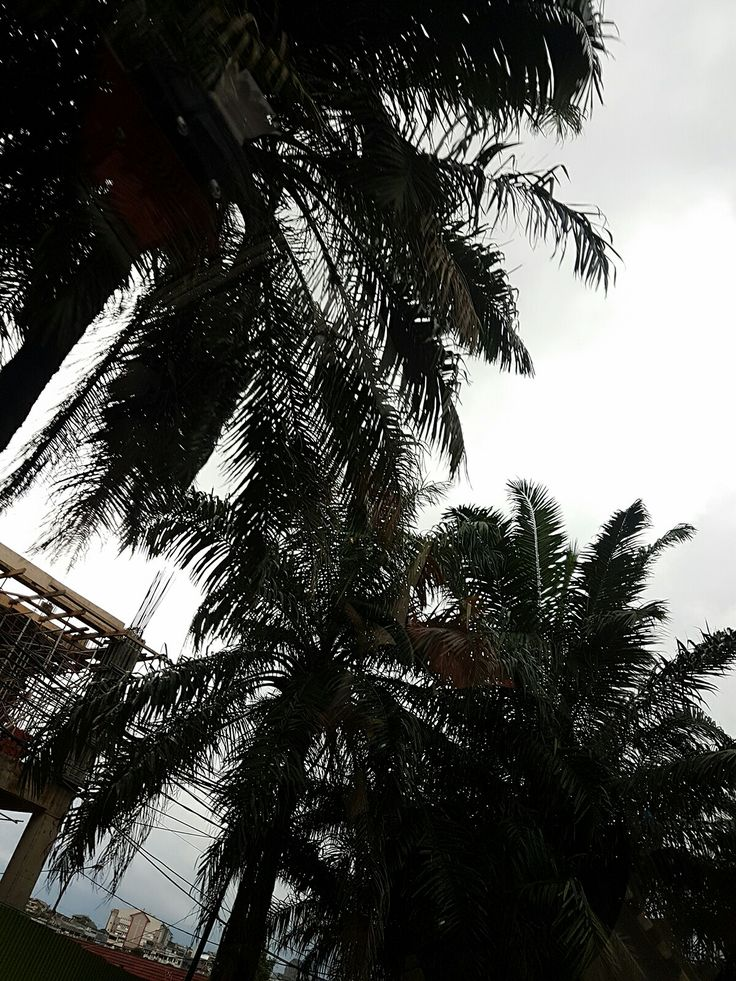 I ran for Palm trees as the shelter when the rain started