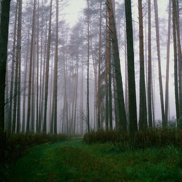 Так выглядит ленивое туманное утро у леса! Такое ощущение, что ему тоже вставать неохота.. Одно из любимых фото с пленок. #dichstore #wool #leather #craft #goodmorning #natgeoru ❤️