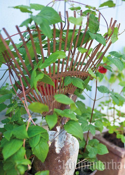 Vanhat puutarhatyökalut toimivat esteettisinä kasvitukina. Kuva Min Eden -bloggaajan puutarhasta. www.kotipuutarha.fi