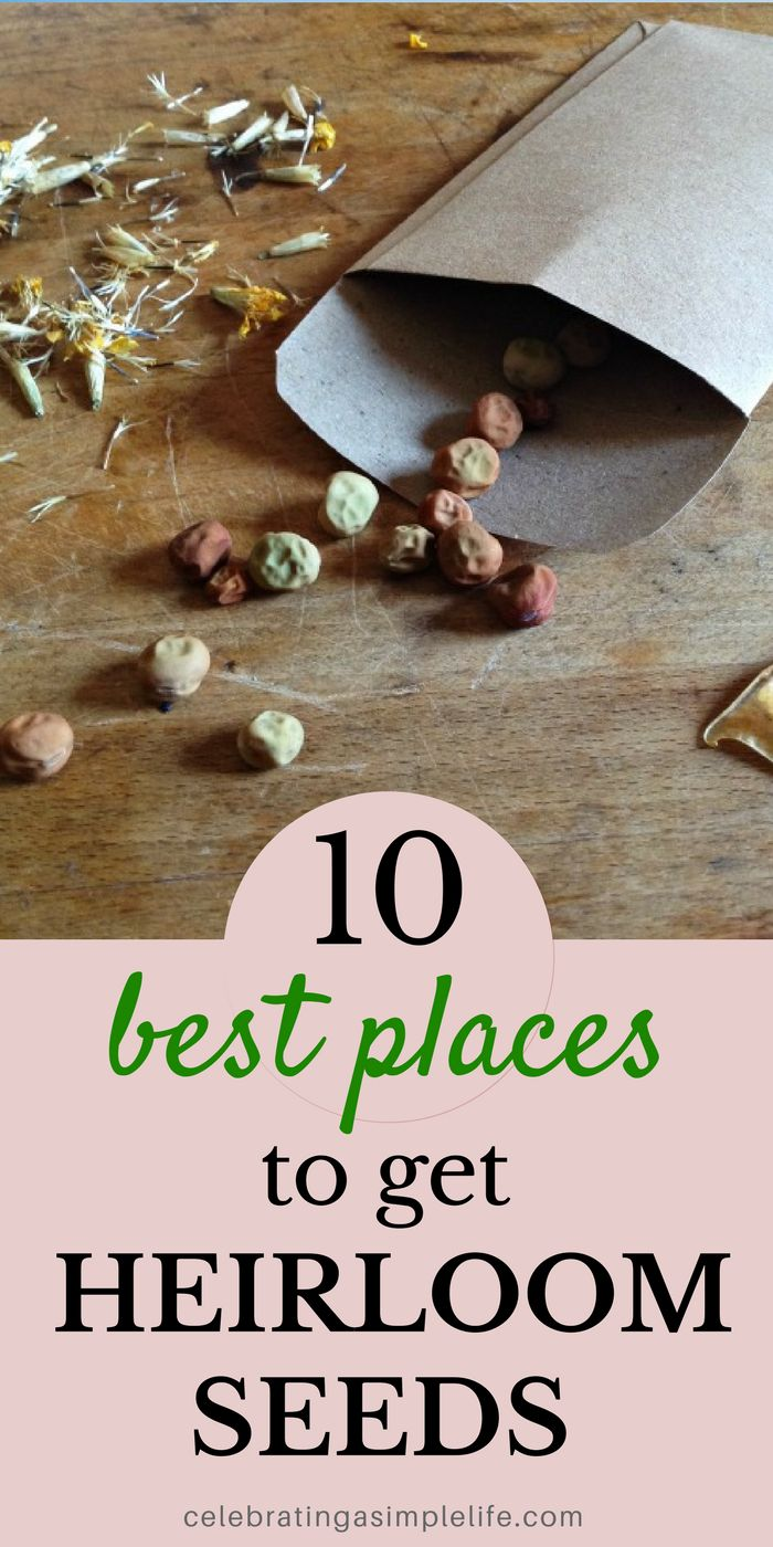 Best places to get heirloom seeds! These 10 companies have great heirlooms seeds - they're my absolute favorite places for getting seeds!