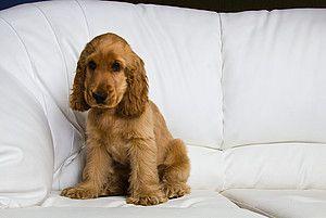 """""""Ziel ist es also, dass der Hund einen Weg finden kann, sich auch während unserer Abwesenheit wohl zu fühlen und sich zu entspannen."""" Easy Dogs / Trennungsstress –Wenn Hunde nicht alleine bleiben wollen, Gerd Schreiber"""