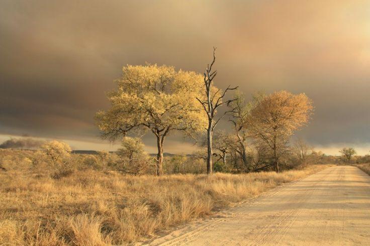 Beauty from ashes by Jo-anne Hounsom on www.digitalgallery.co.za