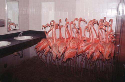 flamingos: Girls, Inspiration, Pink Flamingos, Men Bathroom, Legs, Pink Animal, The Zoos, Birds, Medium
