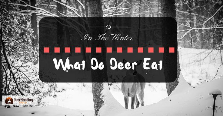 Do you ever wonder what do deer eat in the winter? Well, winter remains a tough time for any deer to survive.The chilling cold does not catch...