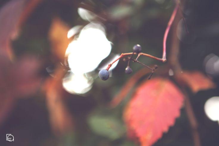 The magic of autumn