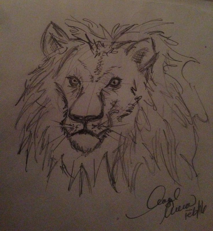 Pencil Lion Drawing. My Favourite