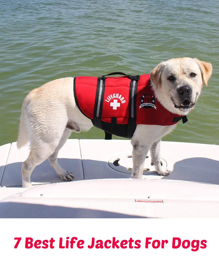 Need a great life jacket for your dog? While one in particular is the most popular with consumers, we've included six others that also great when it comes to customer satisfaction and reviews. Read our recommendations for which would be best for your dog... See more at PetsLady.com - The FUN site for Animal Lovers.