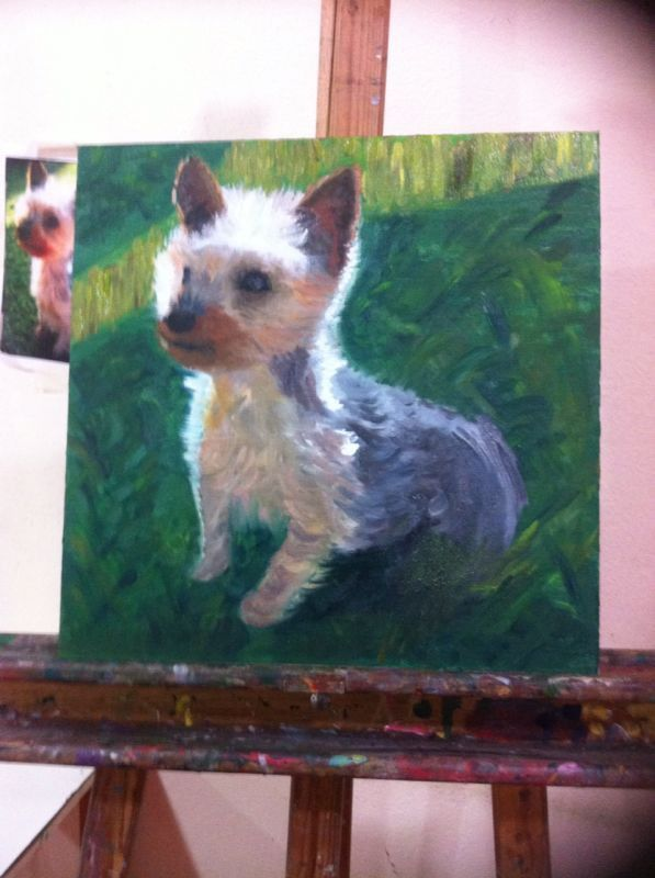 Perro yorsay terrier