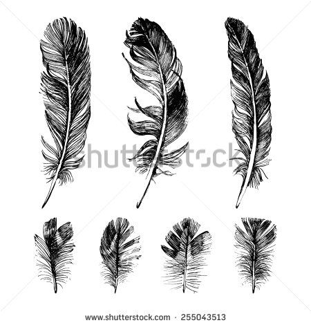 Hand drawn feathers set on white background - stock vector