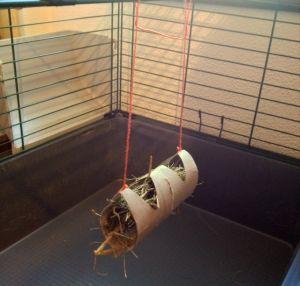 M s de 1000 ideas sobre juguetes caseros para gatos en pinterest juguetes para gatos gatos y - Juguetes caseros para conejos ...
