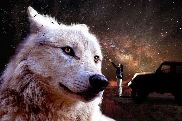 Imagen gratis en Pixabay - Fantasía, Jeep, De Hadas, Wolf