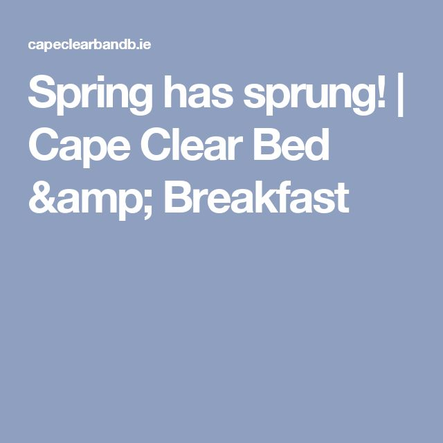 Spring has sprung! | Cape Clear Bed & Breakfast