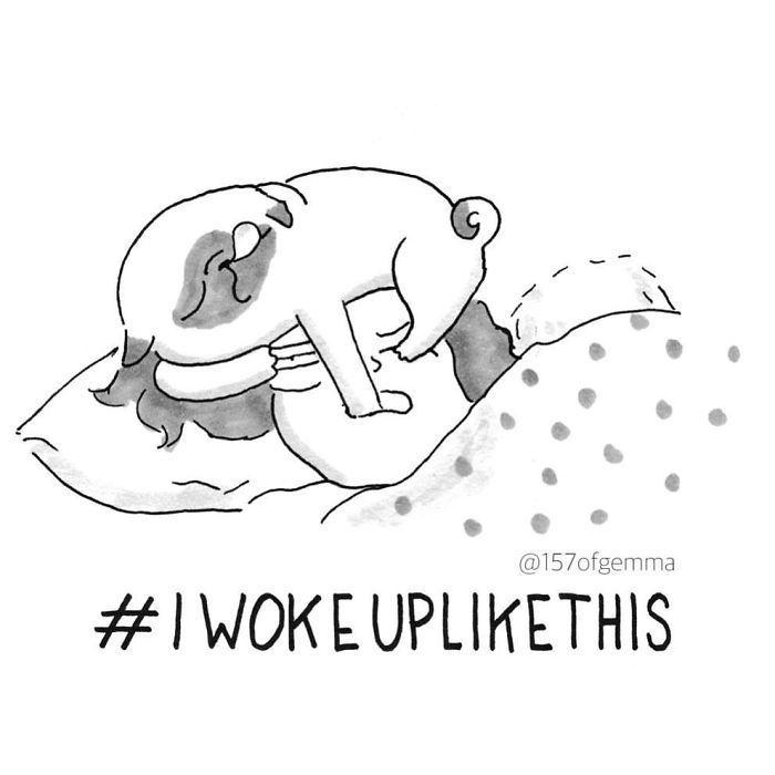Life with a pug - woke up like this