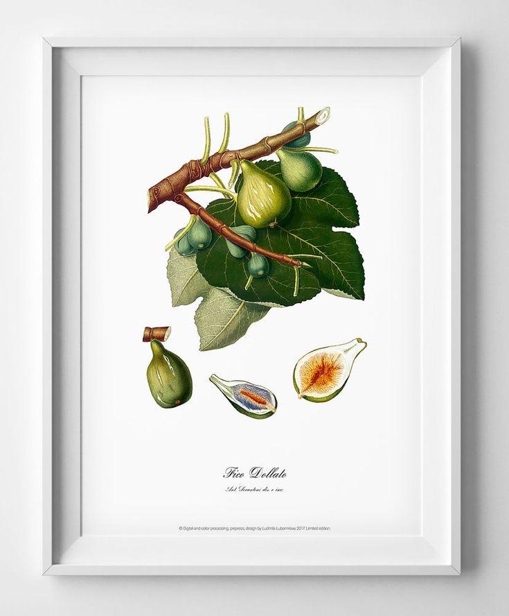 Botanical art print poster Figs vintage antique watercolour picture room decor #Vintage