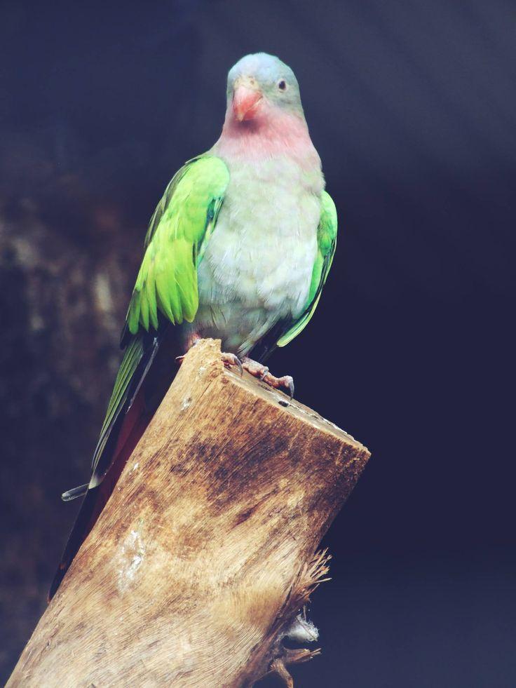 Free Image,  Wood, Humming, Bird, Free Photo, Wildlife, Nature, Fauna, Animals