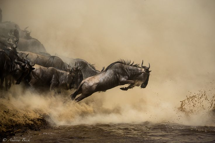 Crossing_Points_of_the_Mara_