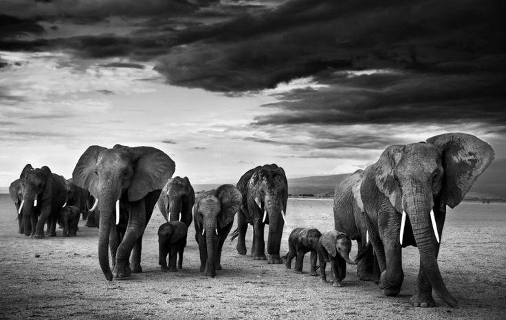 23дико эмоциональные фотографии животных