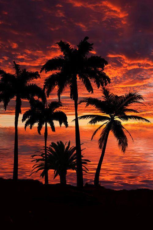 Surf and Skate — earthyday: Lovely Sunset © Mbi…