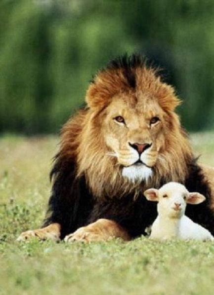 """""""And the lion shall lie down with the lamb..."""""""