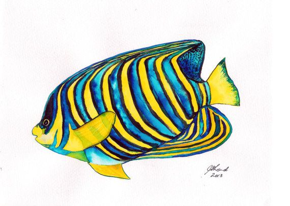 Fish Painting Watercolour Study Of A Regal Angelfish