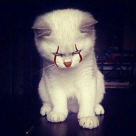 Que miedo! #rotthades #it #pennywise #fanart #geek #fandom #kittens #cats