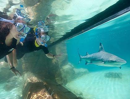 My favorite place to vacation to is called Discovery Cove in Orlando, Florida. It is a snorkeling place with sharks, fish, dolphins, and stingrays. It is definitely a bucket list idea.