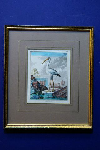 Antieke vogelprent van witte ibis, Hulk, Buffon 19659 op www.lansantiek.com