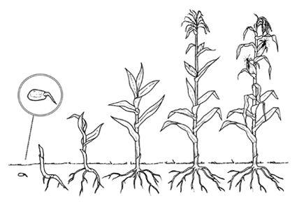 Fichas de las plantas