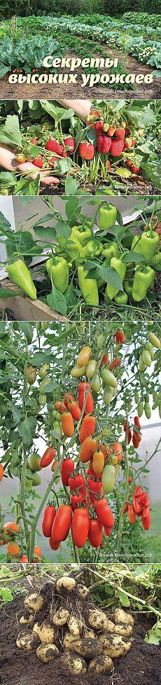 Секреты высоких урожаев — Ваше Плодородие