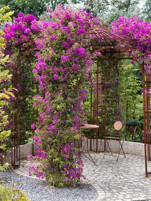 30 Modern Ideas for Outdoor Home Decorating with Flowers and Plants-with string lights on the metal frame would look gorgeous at night