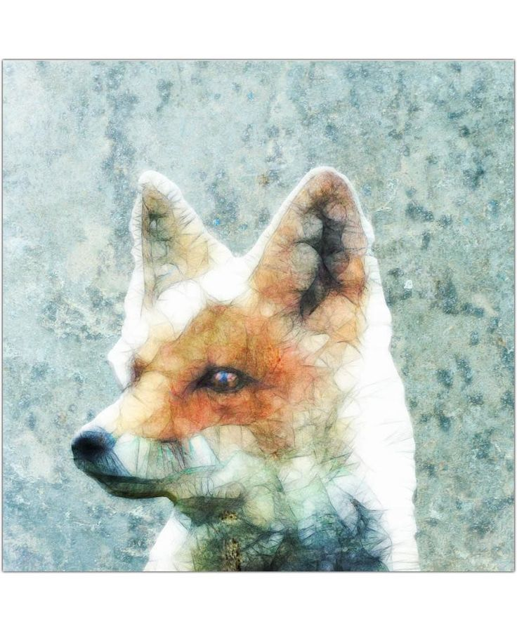Fox of Ancello now on JUNIQE!