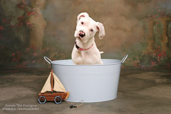Rub A Dub Dub It's A Pittie In The Tub
