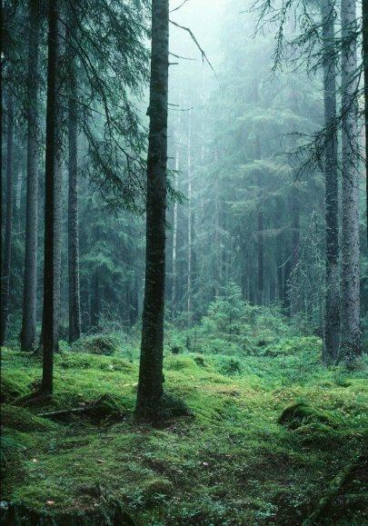 In i djupa skogen