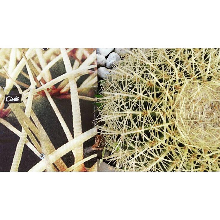 Perfect match! #nature #cimbi_official #cimbi #getyourcimbi #findyourcimbi #perfectmatch #mixandmatch #oazis #cooperation #cactuslove #ecodesign #ecofriendly #conciousshopping #upcycled #design #wallett #bagsandmore 💚✂⭐💡©