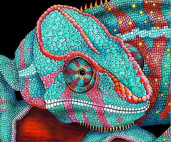 Panther Chameleon Blue Colored Pencil Drawing Fraganciasbebes Chameleon Cute Reptiles Chameleon Tattoo