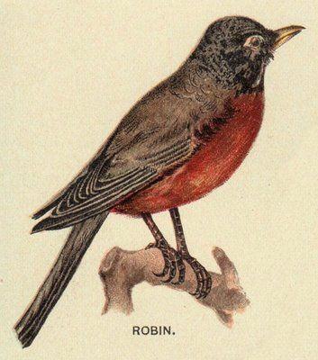 Best 25+ Vintage Birds ideas only on Pinterest | Bird prints, Vintage bird illustration and ...