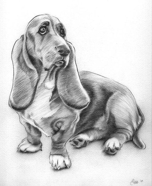 drawings pencil dog drawing easy dogs hound basset sketch alisa wilcher draw puppy animal beagles puppies similar items eating imgarcade