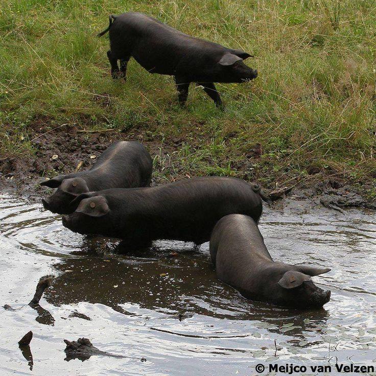 Pootje baden door @buitenvarkens...cool!