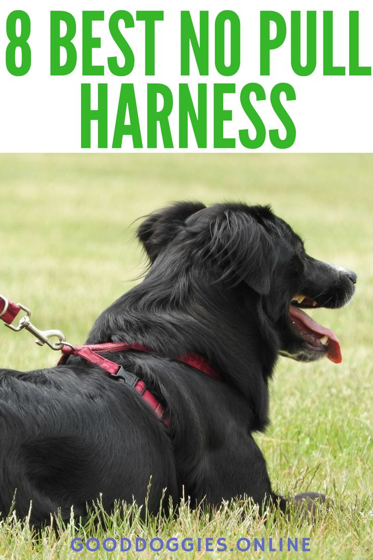 Has your dog been giving you a hard time with their leash pulling? Try out any of these best no pull harness to make your walks safe and stress-free!