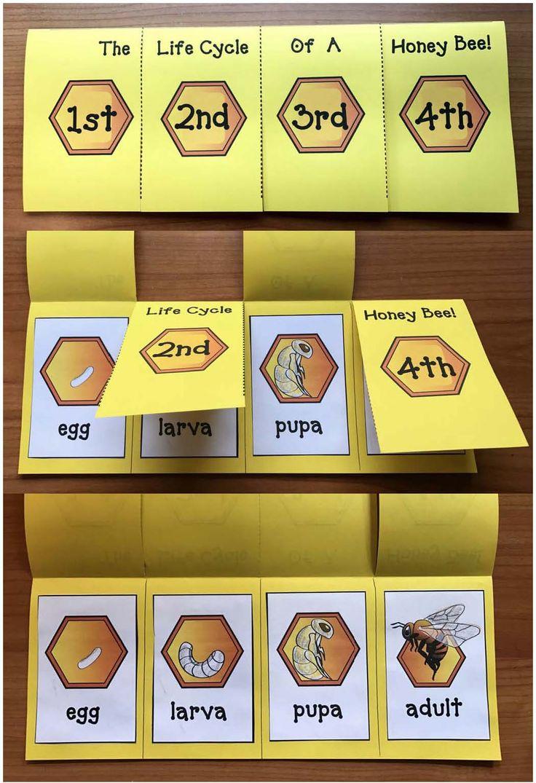beekeeping, bee crafts, honey bee crafts, honeybee activities, beehive craft, life cycle of a bee activities
