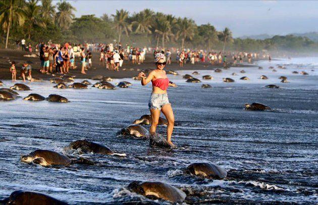 Turistas invadieron refugio de tortugas marinas en Costa Rica. Foto: Facebook, Sitraminae