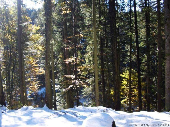 2002 -  Podrška WWF-u - WWF i IKEA Grupa započeli su 2002. godine saradnju na podizanju svesti za odgovorno upravljanje šumama.