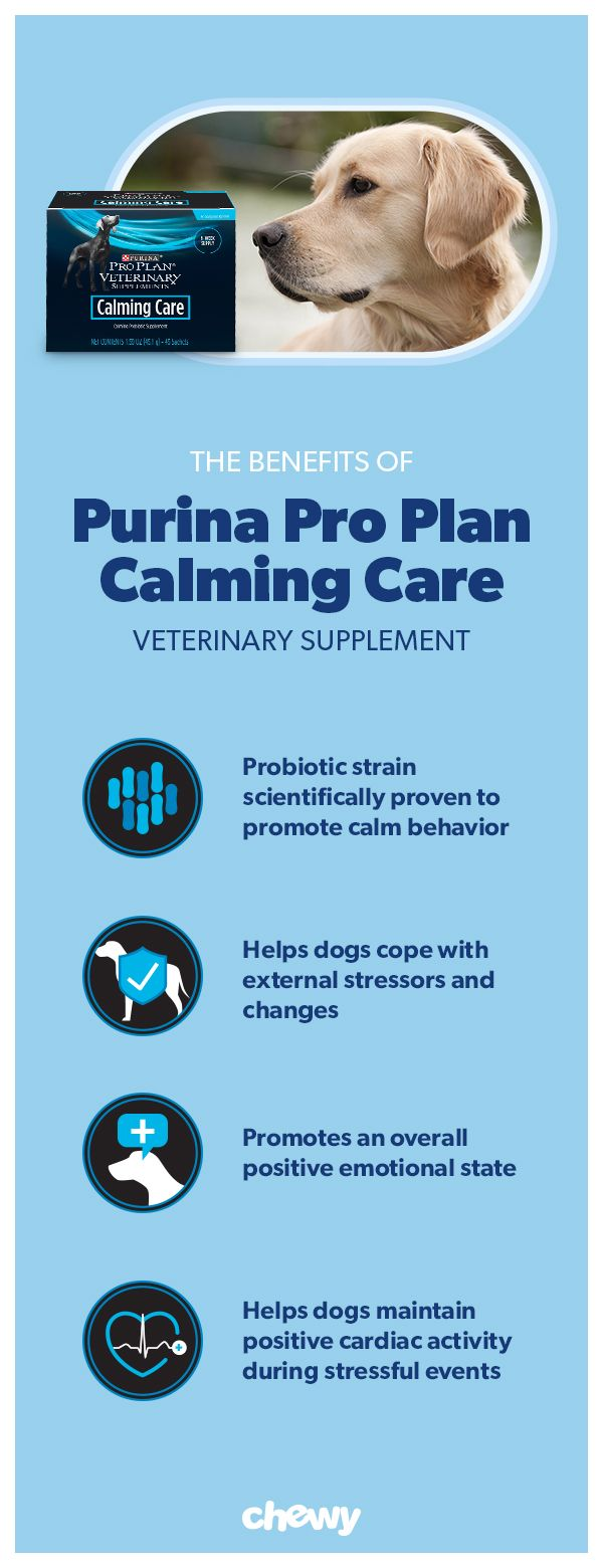 Purina Pro Plan Veterinary Diets Calming Care Probiotic Dog Supplement 45 Count Chewy Com Dog Supplements Purina Purina Pro Plan