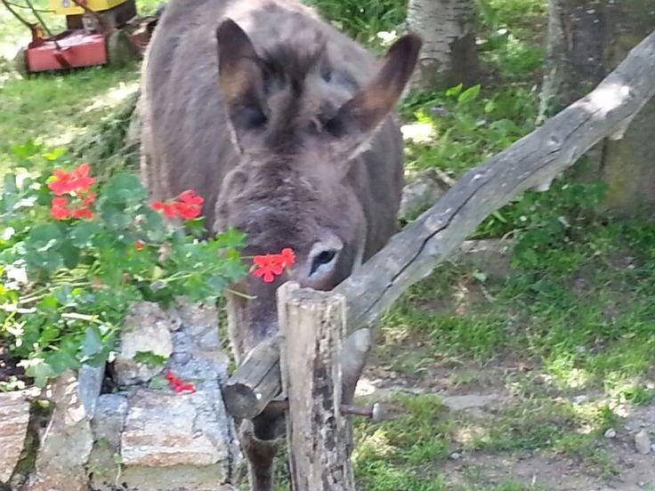 Oh my little donkey. Pic from Italia Multimedia and Laboratori Creativi Beretta :-)