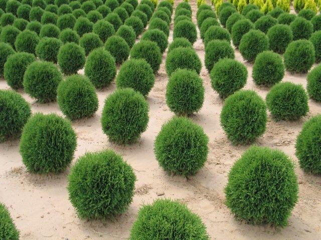 Egy hét múlva egy közösségi program keretében fákat ültetünk a XVII. kerületben.           A faültetés amellett, hogy a jövő építésének állandó szimbóluma, fontos ökológiai jelentőséggel bír. A közfigyelem általában a fák oxigéntermelő képességére irányul, ennél azonban nagyobb szerepet játszik a szén-dioxidot feldolgozó...