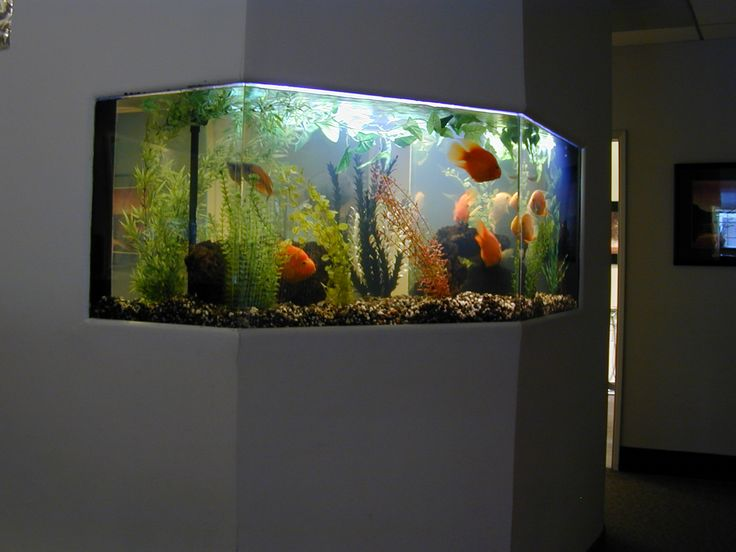 Awesome Unique Aquarium Design Ideas ~ http://www.lookmyhomes.com/pick-one-of-unique-aquariums-design-ideas-for-your-fish/