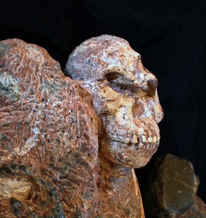 Little Foot - Australopithèque