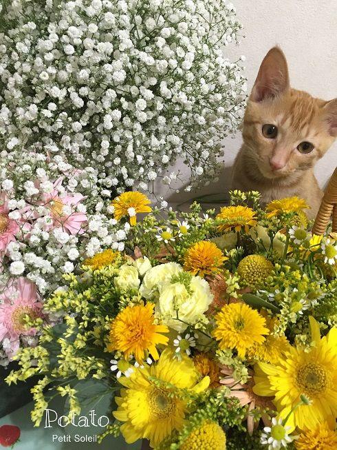 茶トラ猫    red tabby cat